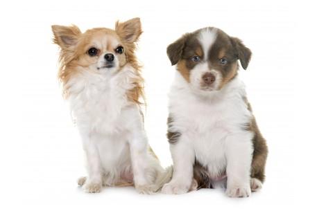 Появление щенка в семье. Что нужно купить для щенка?