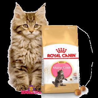 Royal Canin Maine Coon Kitten.  Полнорационный корм Роял Канин для котят породы Мейн-кун.  2 кг.