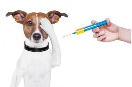 Прививка для питомца: от чего и когда надо вакцинировать домашних животных. Обязательная программа